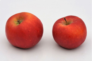 Apfelbaum 'Topaz'