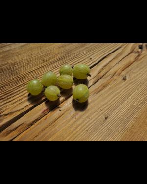 Stachelbeere 'Invicta grün'